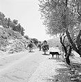 Druzen op zwaar beladen ezels op een landweg met een hond, Bestanddeelnr 255-3746.jpg