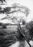ETH-BIB-Bachvegetation am Makungu-River-Kilimanjaroflug 1929-30-LBS MH02-07-0454.tif