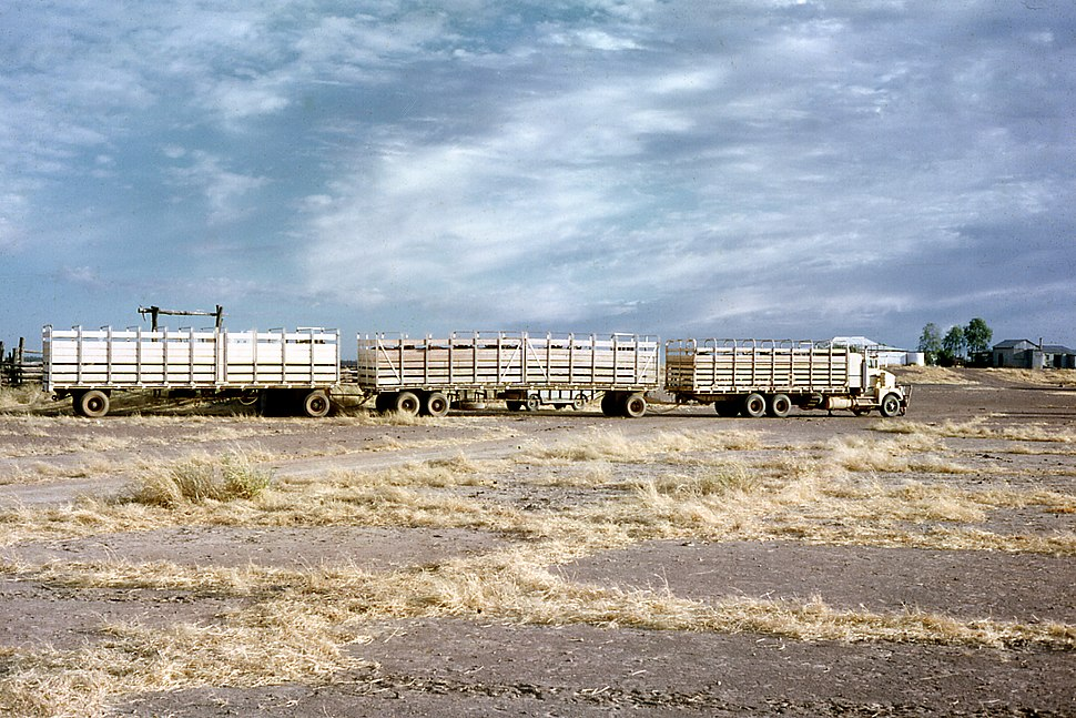 Early Cattle Road Trains at Louisa