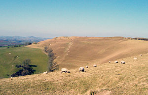 Askerswell - Image: Eggardon hill from south east 19Mar 2006