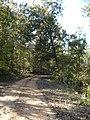 Elm Bluff Plantation Driveway.JPG