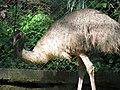 Emu (7856519418).jpg
