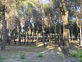 En bici por el parque forestal de entrevías (9).jpg