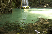 Erawan Falls 3th Cascade With Fish.jpg