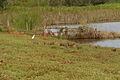 Estrada S Berto - Manduri 040709 REFON 2.JPG