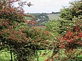 Etchinghill seen through the berry laden hawthorn bushes - geograph.org.uk - 970256.jpg