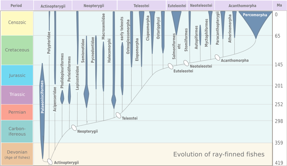 Evolution of ray-finned fish