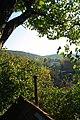 FOREST (2011-10-08 16-17) - panoramio.jpg