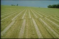 Farm field offset by faulting.tif