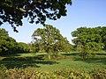Farmland, Lakegate Lane, Ryme Intrinseca - geograph.org.uk - 431111.jpg