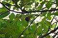 Figs 20.JPG