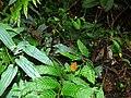 Filament Fungus (Marasmius sp.) (7844117400).jpg