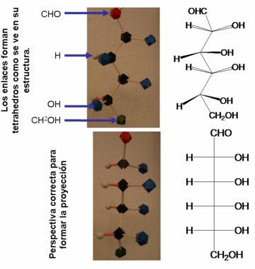 formula estructural de los esteroides