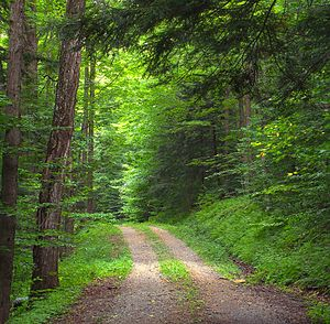 Loyalsock State Forest - A trail in Loyalsock State Forest