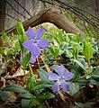 Flickr - Nicholas T - Henry's Woods (1).jpg