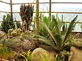 Flickr - brewbooks - In the greenhouse - Paloma gardens.jpg