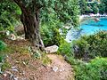 Flickr - ronsaunders47 - FOOTPATH DOWN TO THE COVE..jpg