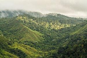 Alto Cariri National Park - Image: Floresta Montana