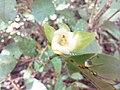 Flower in bhimashankar.jpg