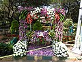 Flower show-12-cubbon park-bangalore-India.jpg