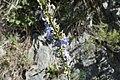 Flowers? (5).jpg