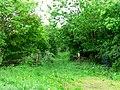 Footpath from Kidds Lane to Intakes Lane - geograph.org.uk - 180425.jpg