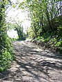 Footpath near Old Dilton - geograph.org.uk - 1282687.jpg