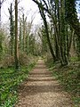 Footpath through Metlands Wood - geograph.org.uk - 154636.jpg