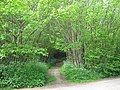 Footpath to Oakenpole Wood - geograph.org.uk - 1297950.jpg
