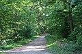 Forêt domaniale de Bois-d'Arcy 66.jpg