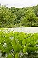 Forest Park, Springfield, MA 01108, USA - panoramio (42).jpg
