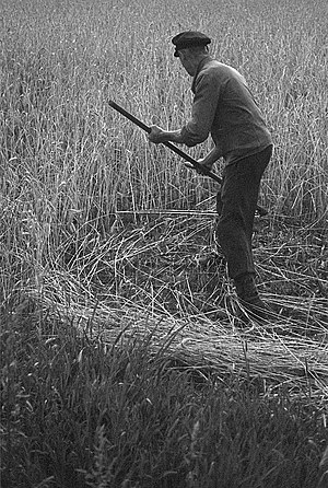 Swathe - A mower with a scythe cuts a swathe through the crop.