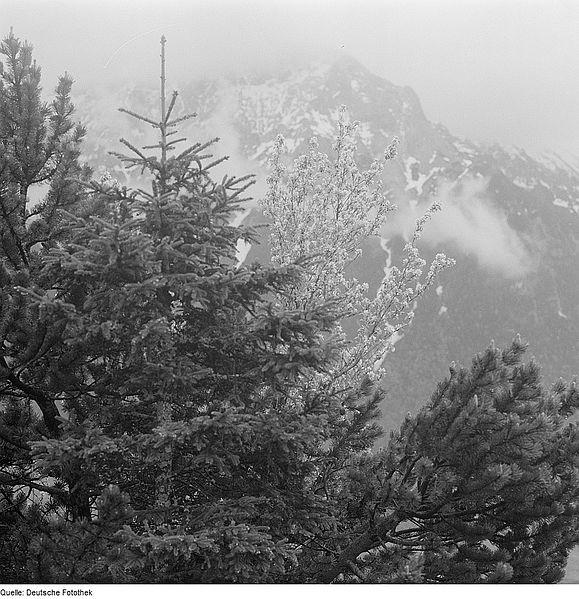 File:Fotothek df ps 0001794 Bäume ^ Landschaften ^ Hügellandschaften - Gebirgslandsch.jpg