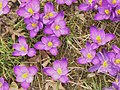 Fruehling in Berlin (Spring in Berlin) - geo.hlipp.de - 34634.jpg