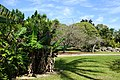 Fruit and Spice Park - Homestead, Florida - DSC08947.jpg