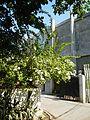 FvfBustosBulacan0106 08.JPG