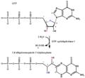 GTP-cyclohydrolase-reaction.png