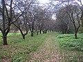Garden in Minsk.jpg