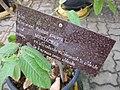 Gardenology.org-IMG 7804 qsbg11mar.jpg