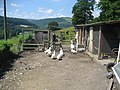 Geese at Ty Brickly - geograph.org.uk - 919509.jpg
