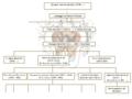 Genealogia famiglia Banchieri 4.png