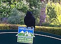 General Manager of Parks and Gardens of Vancouver - panoramio.jpg