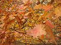 Gfp-wisconsin-governor-dodge-state-park-autumn-leaves-close-up-at-governor-dodge.jpg