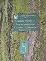 Ginkgo biloba (Jardin des Plantes de Paris) plaque.jpg