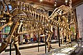 Giraffatitan brancai, Berlin Natural History Museum (3) (39285312065).jpg