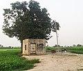 Gola Kang di Motor, Rolu Majra, Rupnagra, Punjab, 140102, India - panoramio.jpg