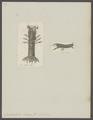 Gonodactylus chiragra - - Print - Iconographia Zoologica - Special Collections University of Amsterdam - UBAINV0274 097 13 0015.tif
