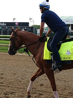 Good Magic American Thoroughbred racehorse