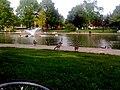 Goodale Park Geese.JPG
