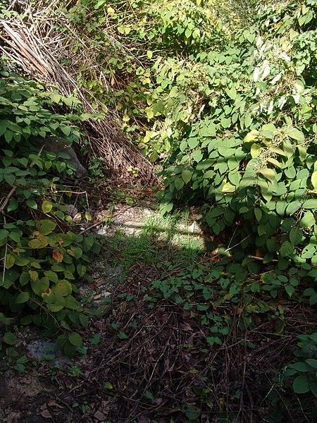 Le ruisseau de Gouhouron totalement à sec dans sa partie aval en début d'automne (étiage)